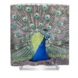 Shower Curtain featuring the photograph Peacock by Caryl J Bohn