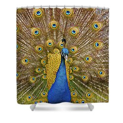 Peacock Courting Shower Curtain by Charles Beeler