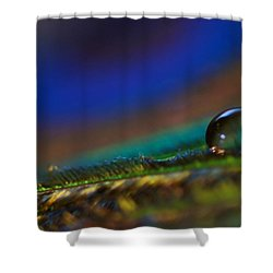 Peacock Drop Shower Curtain by Lisa Knechtel