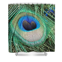 Peacock Feather Shower Curtain by Eric  Schiabor