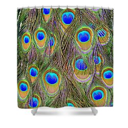Peacock Feathers Shower Curtain by Ramona Johnston