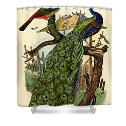 Peacock Shower Curtain by French School