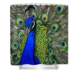 Shower Curtain featuring the photograph Peacock Head by Debby Pueschel