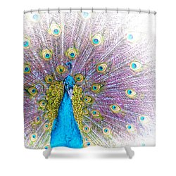 Shower Curtain featuring the photograph Peacock by Holly Kempe