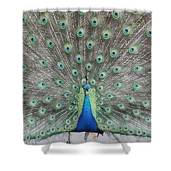 Shower Curtain featuring the photograph Peacock by John Telfer