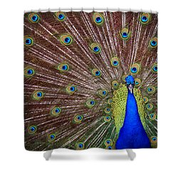 Shower Curtain featuring the photograph Peacock Squared by Jaki Miller