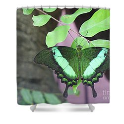 Shower Curtain featuring the photograph Peacock Swallowtail by Lingfai Leung