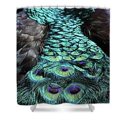 Peacock Trail Shower Curtain by Karol Livote