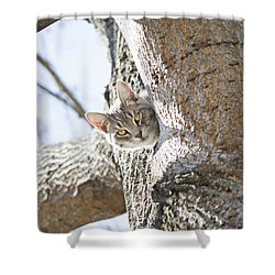Peaking Cat Shower Curtain