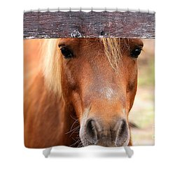 Peaking Pony Shower Curtain