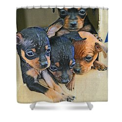 Peanuts Puppies 4 Of 5 Shower Curtain by Tom Janca