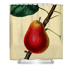 Pear 1829 Shower Curtain by Philip Ralley