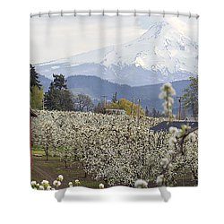 Pear Tree Orchard In Hood River Oregon Shower Curtain