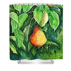 Pear Shower Curtain by Zaira Dzhaubaeva