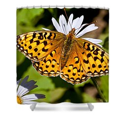 Shower Curtain featuring the photograph Pearl Border Fritillary Butterfly On An Aster Bloom by Jeff Goulden