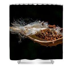 Pearl Milkweed Pod Split Open Shower Curtain