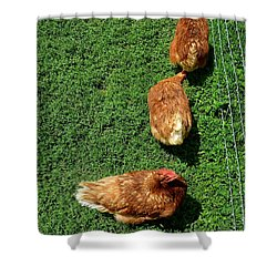 Pecking Order Shower Curtain