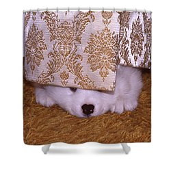Peek-a-boo Shower Curtain