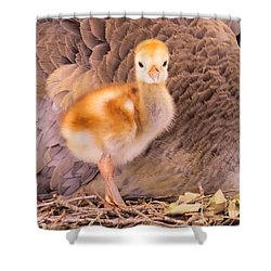 Peek-a-boo I See You Shower Curtain by Zina Stromberg