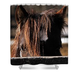 Peek-a-boo Pony Shower Curtain