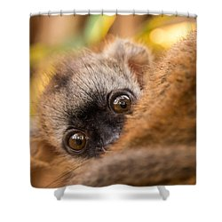 Peekaboo Shower Curtain