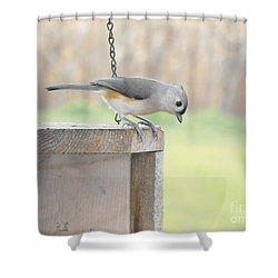 Peeking Chickadee Shower Curtain