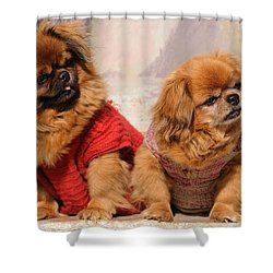 Pekingese Pair Shower Curtain by Jeremy Voisey