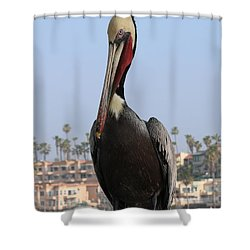 Pelican - 2  Shower Curtain