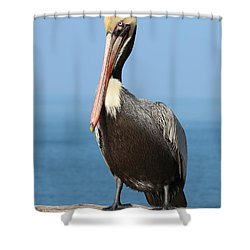 Pelican - 3  Shower Curtain