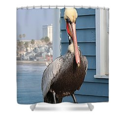 Pelican - 4 Shower Curtain