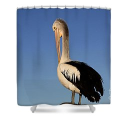 Pelican Alone Shower Curtain