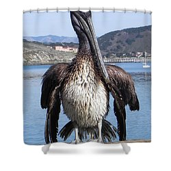 Shower Curtain featuring the photograph Pelican At Avila Beach Ca by Kathy Churchman
