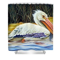 Shower Curtain featuring the painting Pelican At East Pearl by Phyllis Beiser