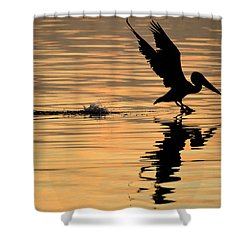 Pelican At Sunrise Shower Curtain