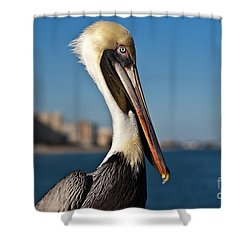 Shower Curtain featuring the photograph Pelican by Barbara McMahon
