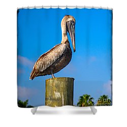 Pelican Shower Curtain by Carsten Reisinger