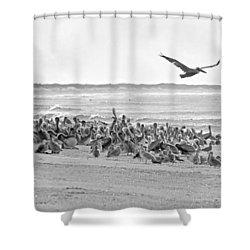 Pelican Convention  Shower Curtain