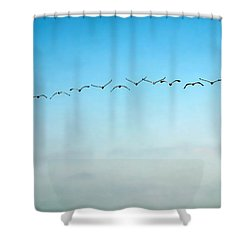 Pelican Flight Line Shower Curtain
