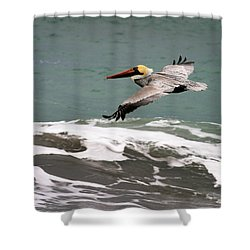 Pelican Flying Shower Curtain