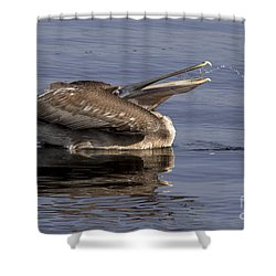 Pelican Fountain  Shower Curtain