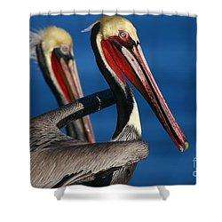 La Jolla Pelicans In Waves Shower Curtain