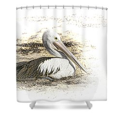 Shower Curtain featuring the photograph Pelican by Holly Kempe