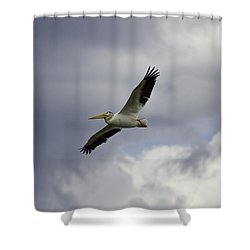 Pelican In Flight Shower Curtain by Thomas Young