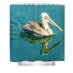 Pelican In San Francisco Bay Shower Curtain by Clare Bevan