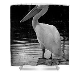 Pelican In The Dark Shower Curtain by Laurie Perry