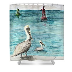 Pelican Shower Curtain