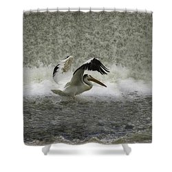 Pelican Landing In Color Shower Curtain by Thomas Young