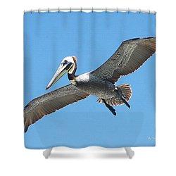 Pelican Landing On  Pier Shower Curtain by Tom Janca