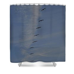 Pelican Line Shower Curtain