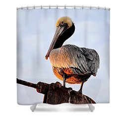Shower Curtain featuring the photograph Pelican Looking Back by AJ  Schibig